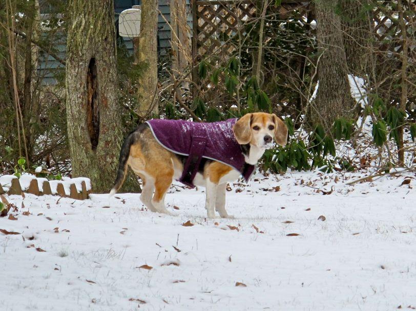 Snowy Chloe